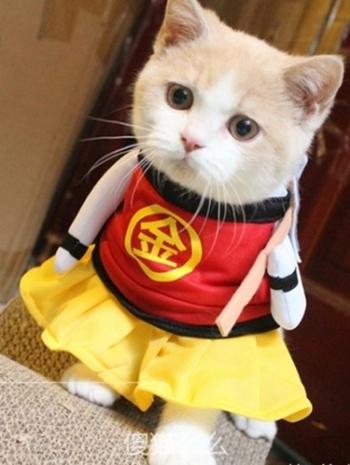 【Z436097】逗趣日本金太郎變身裝立體/站立造型寵物衣/貓咪狗狗衣服-Flourish