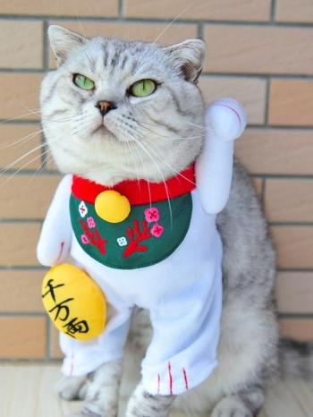 【Z436101】超萌日本招財貓變身裝立體/站立造型寵物衣/貓咪狗狗衣服-Flourish