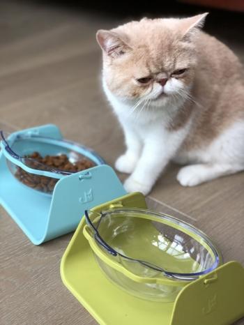 【Z638050】可愛透明貓耳造型護頸椎斜口寵物碗/貓碗/飼料碗-Joyful